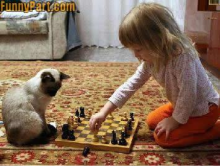 Girl plays chess with cat